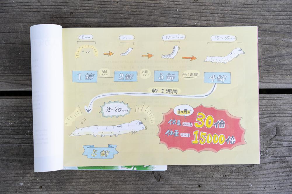 株式会社とみひろ 養蚕部 兼 広報部 星美沙子さん 手作りの紙芝居の中の1枚。カイコの成長過程